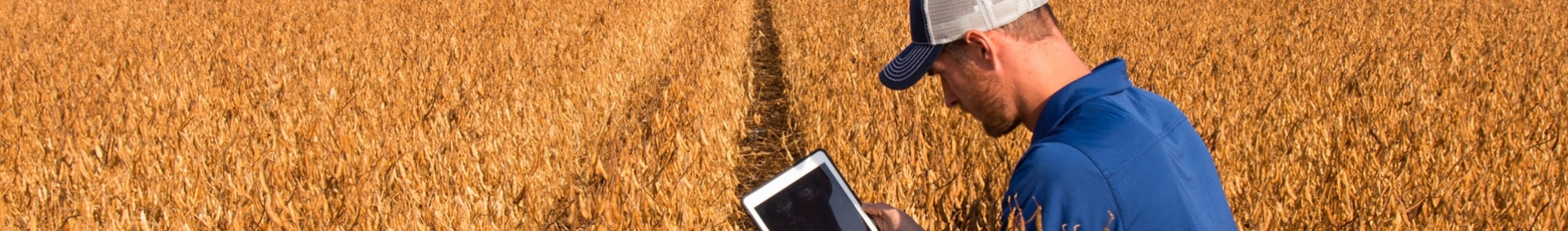 Soybean field with farmer on tablet